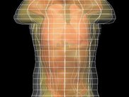 Translucency: the torso model