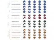 Coulson Plot showing many protein complexes across taxa