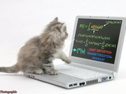 i didnt know cats love computers?