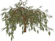 Salix Babylonica tree model rendering using EcoMod