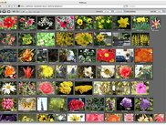 PHPture in Apple Safari with the browser filling the screen.