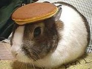 I have no screenshots of my work, so heres a bunny with a pancake on its head.