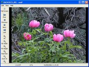 Windows: image viewer