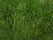 3D Depth-of-Field: Grass, by lancelet