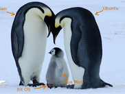 The Penguin Family