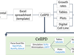 CellPD takes in experimental data and automatically quantifies key aspects of cell phenotype and generates useful outputs.