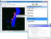 User defined cell interaction analysis of a fluorescent bone image with in-program scripting.