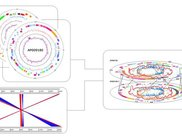 Evolution in circular and comparative genome maps
