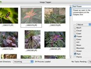 Image Tagger (OS X), showing Title, Caption, Keywords