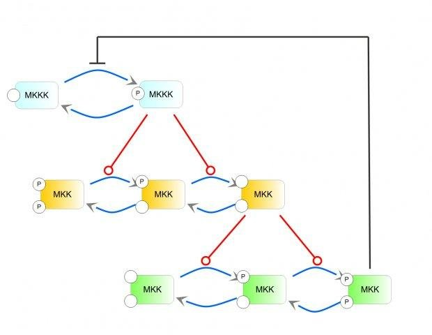 Systems biology software project download sourceforge jdesigner network diagram ccuart Gallery