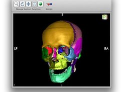 3D view of meshes (Here skull osteology)