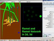4) Ramet Network in 2d and 3d