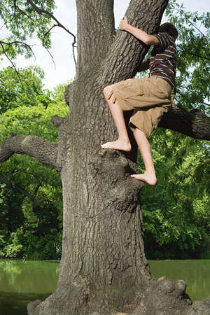Boy Left Stranded In Tree Because of Health and Safety Policy 73